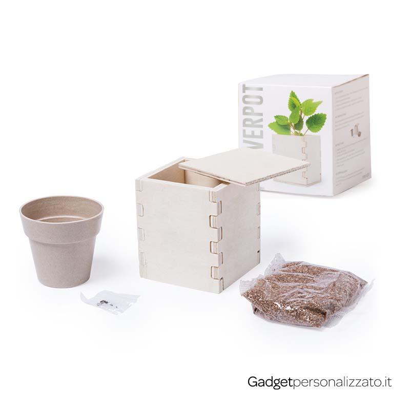 Scatola in legno con vasetto con semi di menta